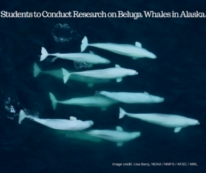 Students to Conduct Research on Beluga Whales in Alaska 6/21/2018